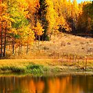 Reflections of Autumn 2016 by Christine Ford