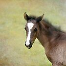 Beautiful baby by Lynn Starner