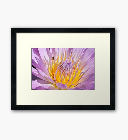 Water Lily, in Pink and Yellow Framed Print
