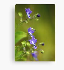 Forked Bluecurls Canvas Print