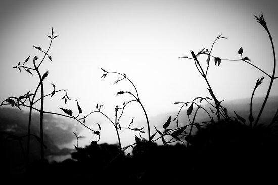 euphoria by Dorit Fuhg