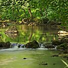 Woodland River Scene, Wolfscote Dale by Rod Johnson