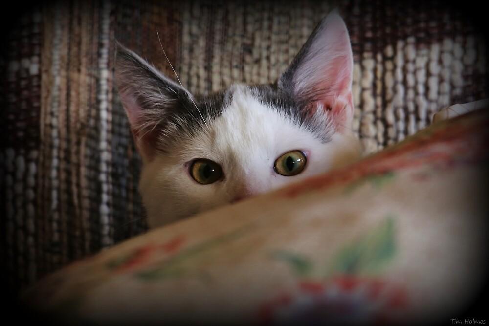 Hiding by Tim Holmes