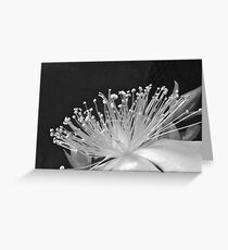 ROSE OF SHARON IN BLACK AND WHITE Greeting Card