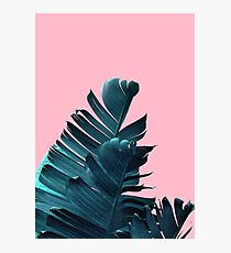 Banana Leaves, Tropical Leaf Print, Pink and Blue Photographic Print