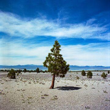 Mono Lake, California by DanielRegner