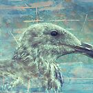 Sea Gull by Donna Ridgway