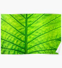 Close up green leaf texture Poster