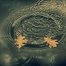 Leaves afloat by Angela King-Jones