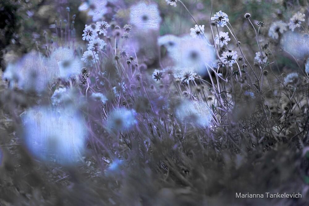 nostalgic dream by Marianna Tankelevich