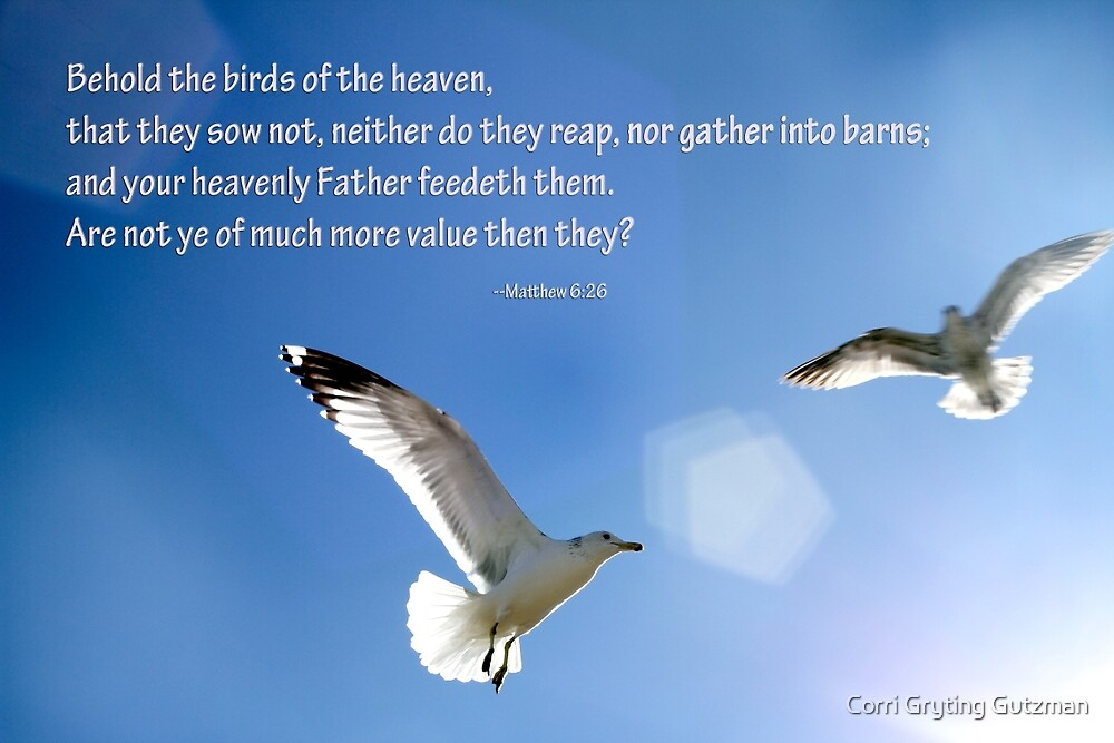 Seagulls with Matthew 6:26 Verse by Corri Gryting Gutzman