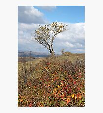 With the Colours of Autumn at My Feet Photographic Print