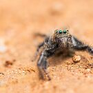 The Emerald Eyes by Shaun Colin Bell