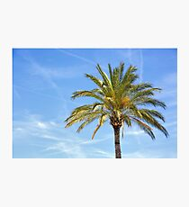 Palm tree against blue sky.  Photographic Print
