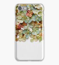 Hydrangea Petals no. 1 iPhone Case/Skin