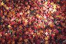 autumn fallen stars by yvesrossetti