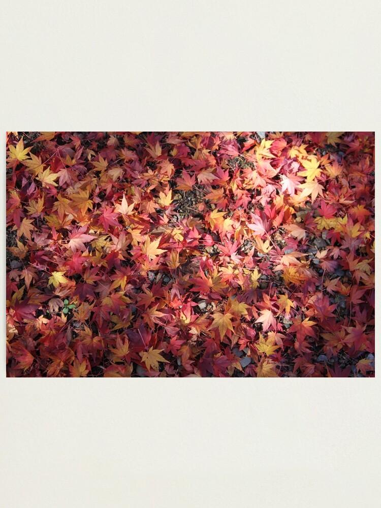 Alternate view of autumn fallen stars Photographic Print