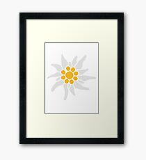 flower nature flowers edelweiss mountains alps bavaria oktoberfest fun beer drinking symbol germany germany Framed Print