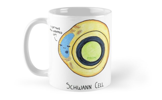 Schwann Cells by Cartoon Neuron