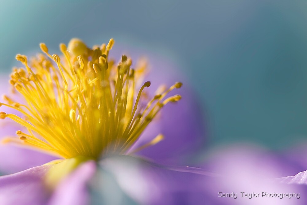 Dream a Little Dream of Me by Sandy  Taylor Photography