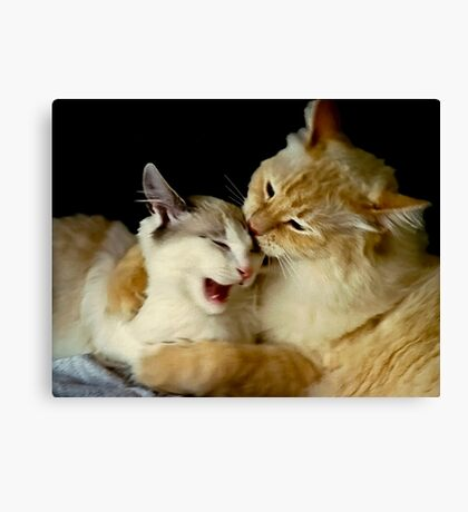 Grooming Time...Ouch!! Canvas Print