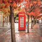 A London Autumn by Ursula Rodgers