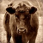 How now brown cow? by Karen Tregoning