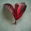 leaves by Jill Ferry