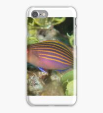 Sixstripe Wrasse iPhone Case/Skin