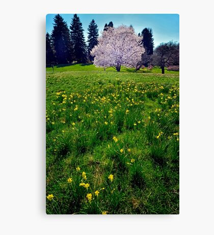 Hawthorn and Daffodils Canvas Print