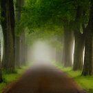 Spring Fog by Mary Ann Reilly
