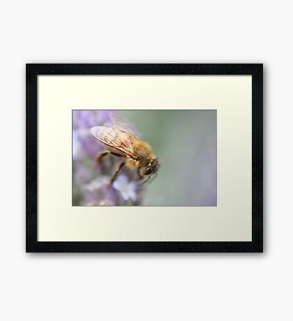Soft on Bees Framed Print