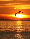Flight into the Fire -- Seagull over Lake Michigan by John Carpenter