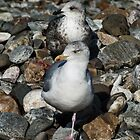 Gulls will be Gulls by Yampimon