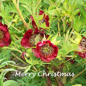 Merry Christmas - Merry Christmas by Boscastle