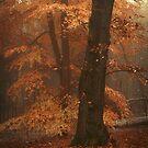 Misty Woods by JennyRainbow