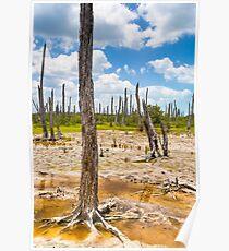 Intriguing Forest On The Yucatán Coast Near Celestún Mexico Poster
