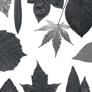 Leaves by martinaceravolo