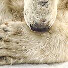 Big Foot by Linda Sparks