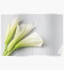 Elegant spring flower, calla lily Poster