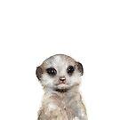 Little Meerkat by Amy Hamilton