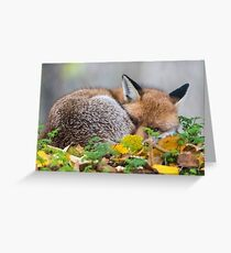 'I've got my eye on you...!' Greeting Card