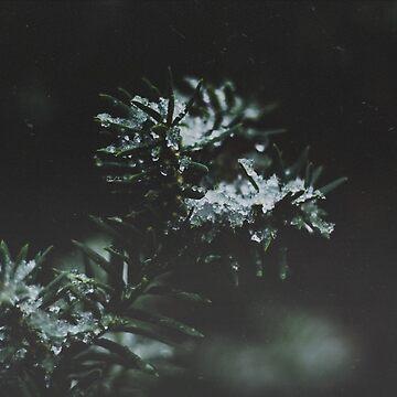 Forever Evergreen  by christinevanfon