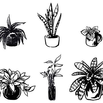 Assorted Houseplants by seasofstars