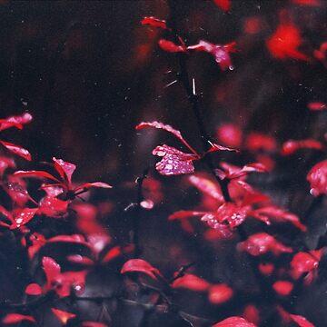 Red  by christinevanfon