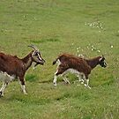 Wild Goats by Kat Simmons