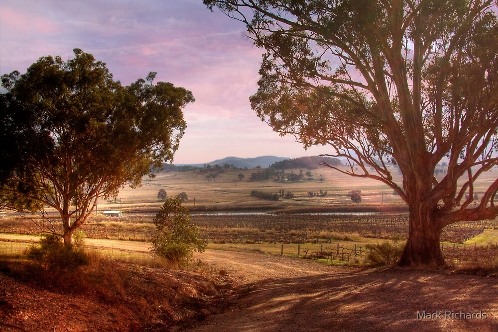 Wineries in Denman III - Near Muswellbrook, NSW by Mark Richards