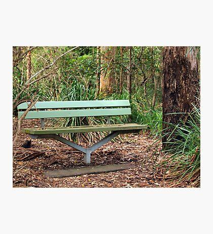 Bush Seat Photographic Print