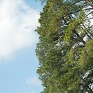 Trees, Louisiana by Deborah Singer
