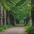 Path by Trine